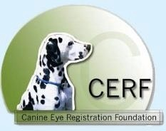 Link to CERF